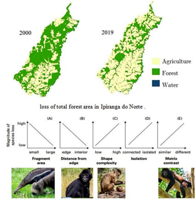 Loss of forest area in Brazil